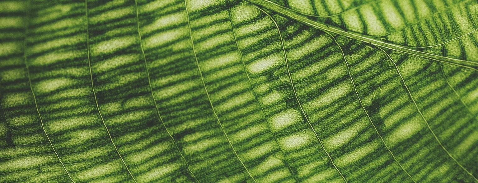 Chlorofyl: wat is het en wat zijn de voordelen ervan?