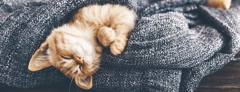 CBD-olie voor honden, katten en andere dieren