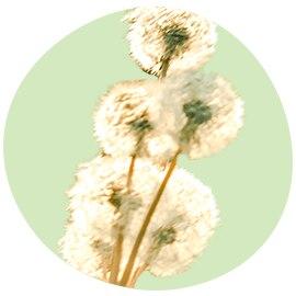 Pollenradar: bekijk het aantal pollen in de lucht