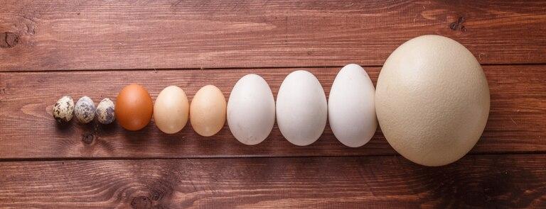 Which Egg Type Is Best? Chicken, Duck or Ostrich?