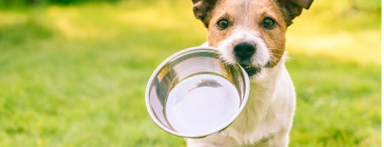 Omega 3 For Dogs - Do they need it?