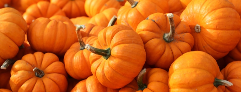 Pumpkin health benefits image