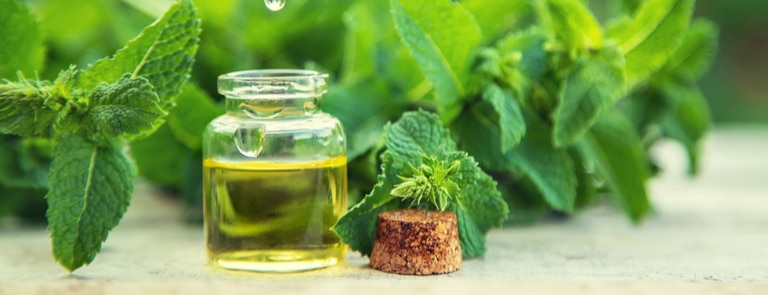 Peppermint oil benefits, dosage & more image