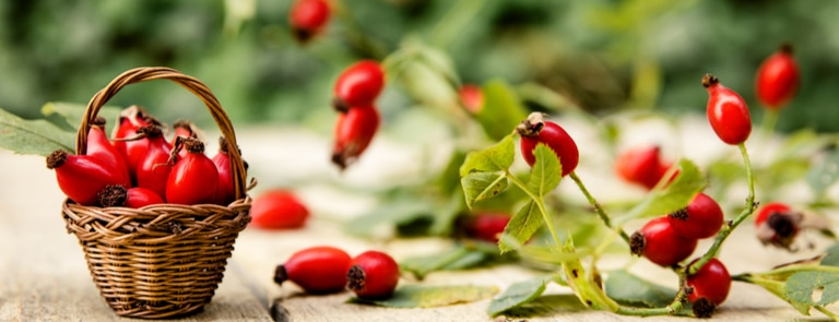 What Is Rosehip Oil: Benefits & Uses