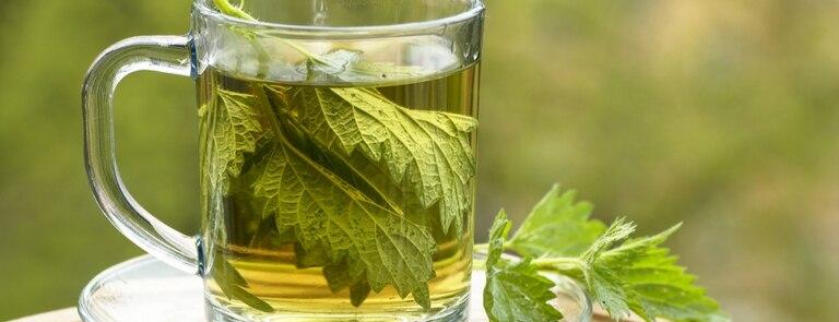 9 Of The Best Nettle Teas
