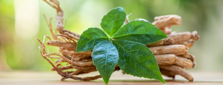 ginseng root and leaves
