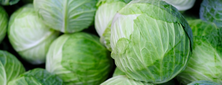 pile of green cabbages