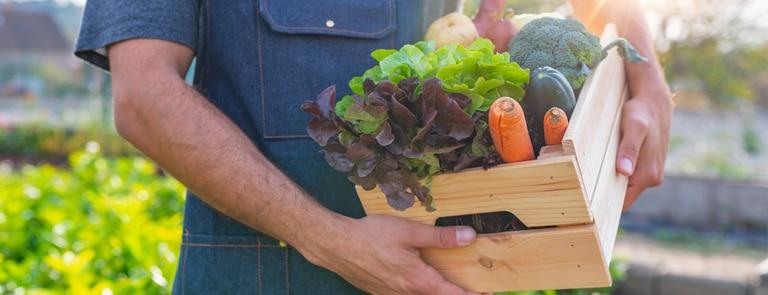 farmer holding organic vegetable produce