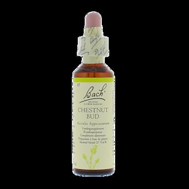 Bach Bloesem Remedie Chestnut Bud (20ml)