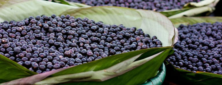 Why Maqui berries & Acai berries are the ultimate superfoods image
