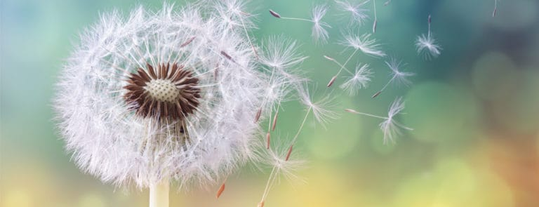 Your Guide to Managing Allergies