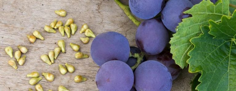 6 Top Health Benefits Of Grapes - From Eye Health To Varicose Veins image