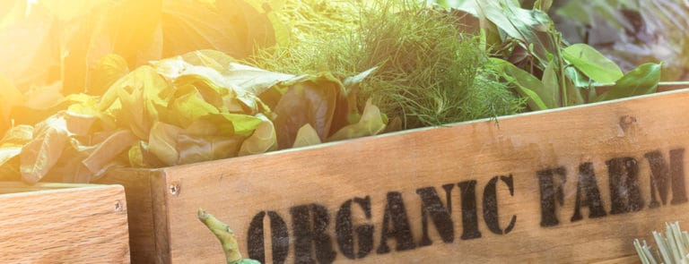 Wooden crate holding fresh organic vegetables