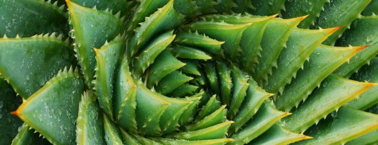 Aloe vera: Benefits, uses, dosage & side-effects image