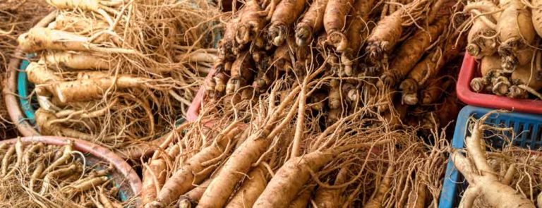 dried ginseng plant