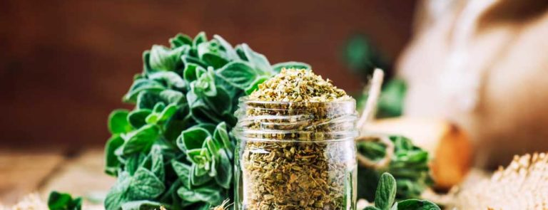 What is Oregano: Uses, Benefits, Side Effects