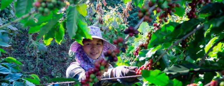 Holland & Barrett Sustainable Coffee