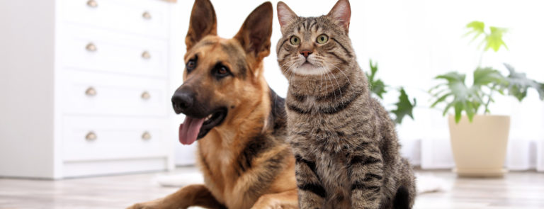 How to look after pets when 'social distancing' or staying at home image