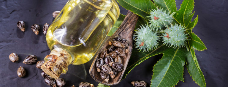The castor oil plant, leaves, flowers and seeds alongside a bottle of yellow liquid; castor oil