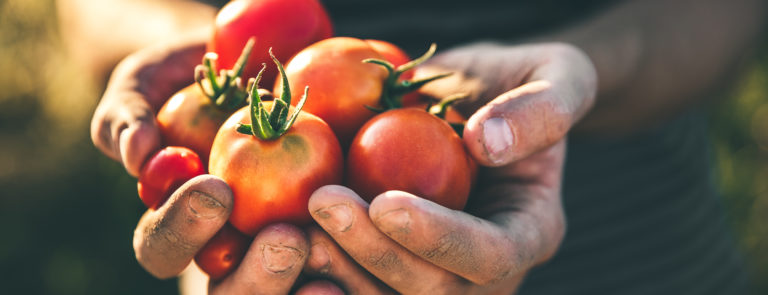 Benefits of eating tomatoes image