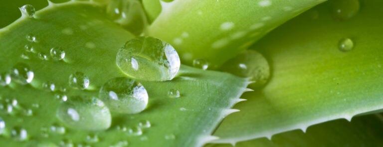 6 Reasons To Start Using Aloe Vera