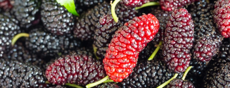 Health benefits of mulberries image