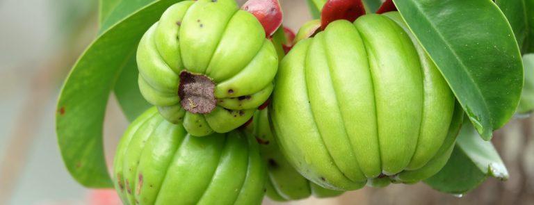 Garcinia Cambogia: Overview, Benefits & Uses