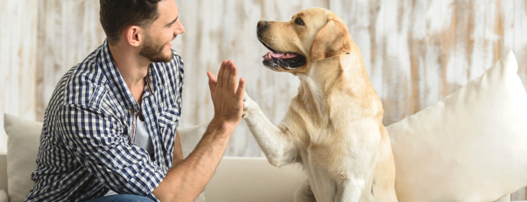 Coconut Oil For Dogs - Is it safe?