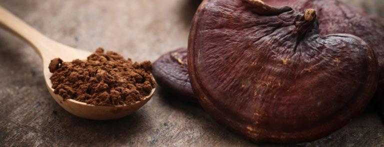 Vegan Mushroom Protein Powder Review